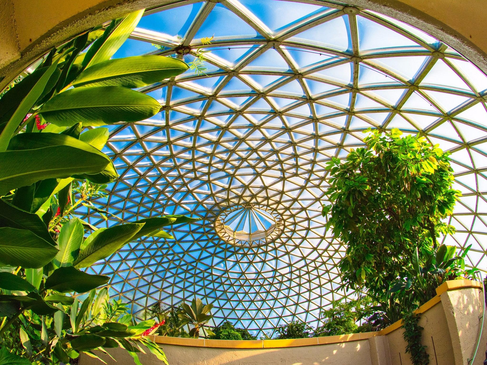 Brisbane Botanic Gardens Mount Coot tha