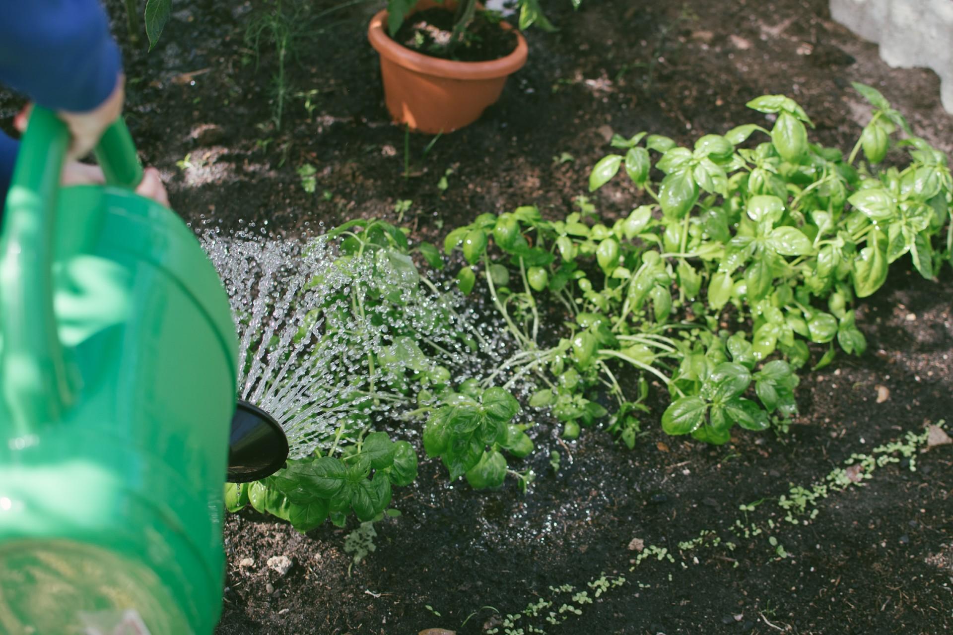 Gardening-unsplash-blog-story