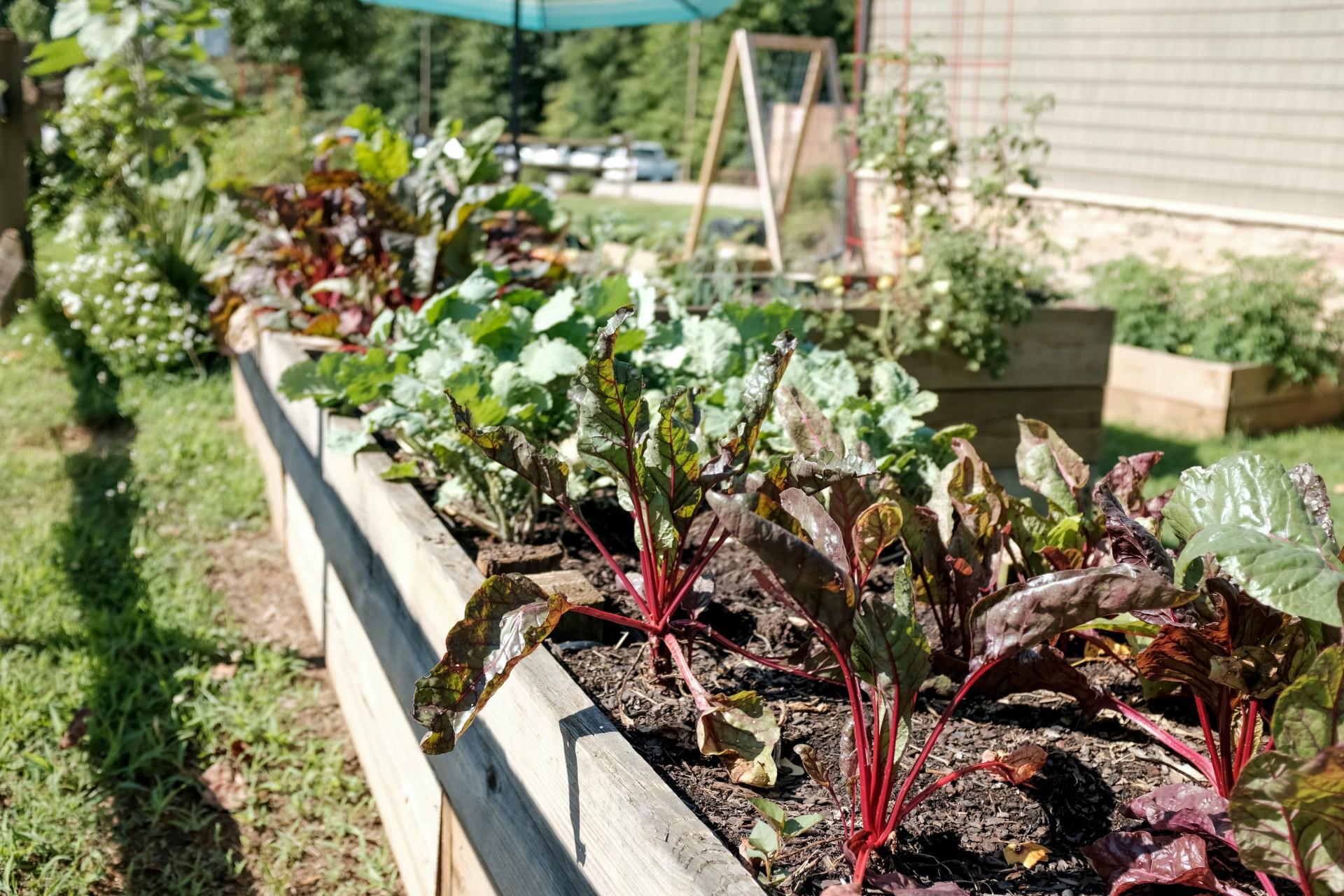 Vegetable-garden-blog-story-unsplash