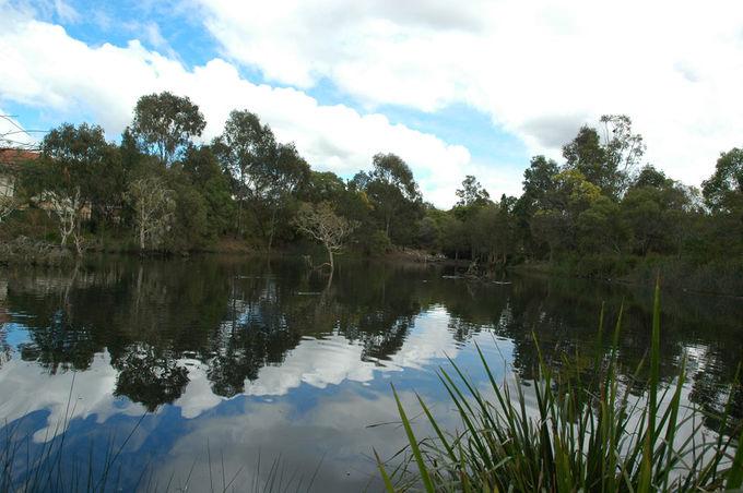 bowies-flat-wetland-coorparoo-(1)