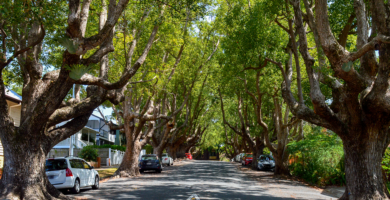 Tree lined street in New Farm
